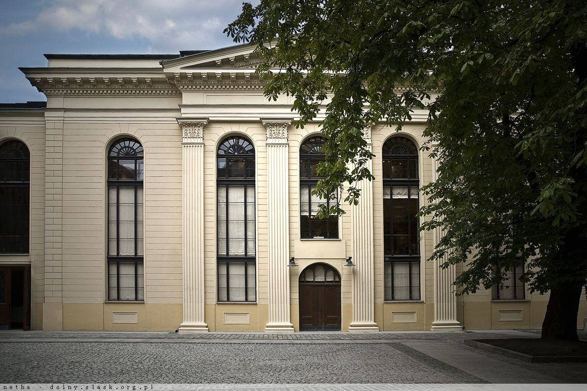 Kasztanowiec koło Synagogi
