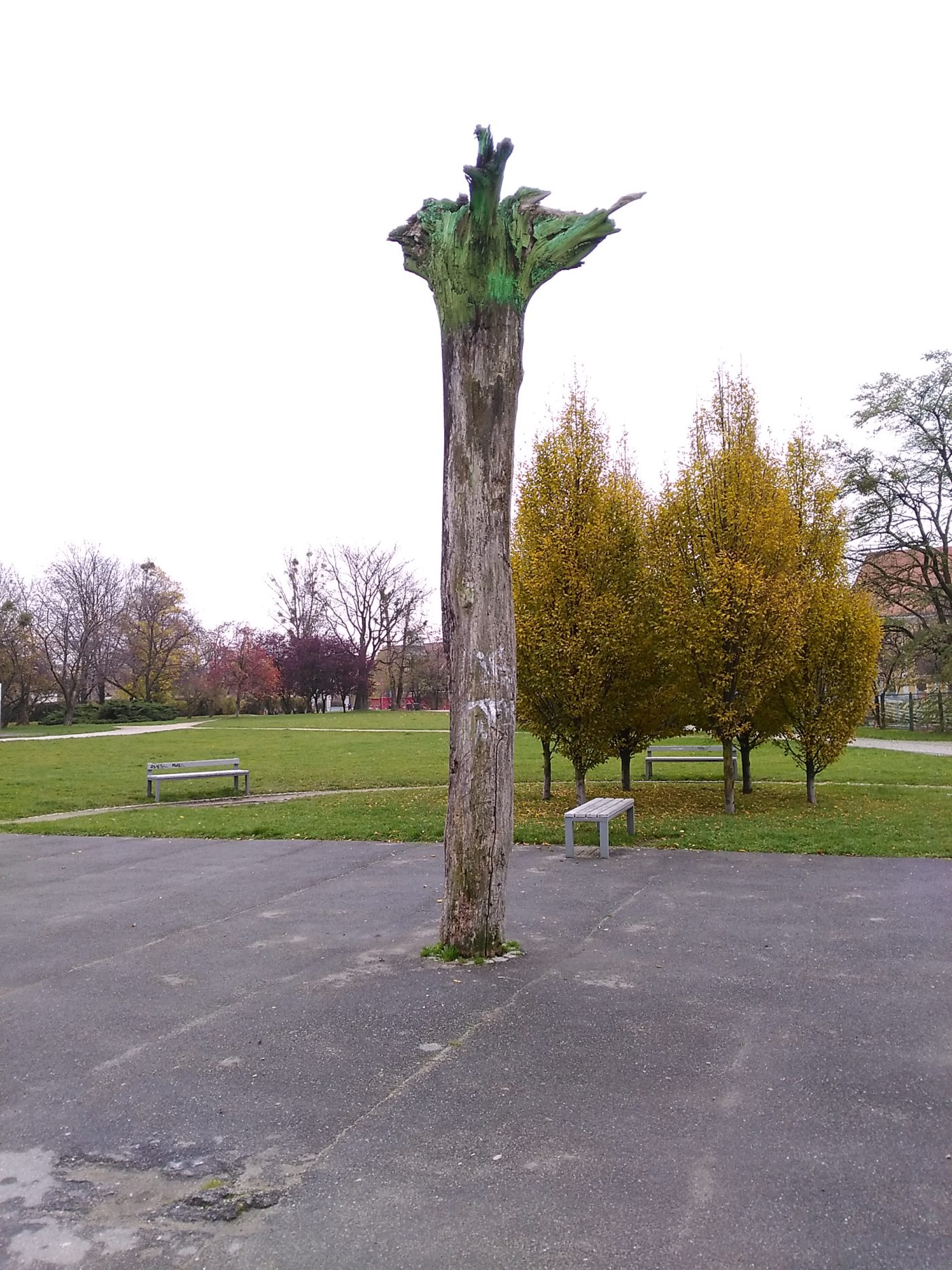 Drzewo Beresia